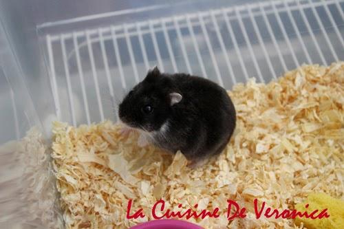 La Cuisine De Veronica 倉鼠