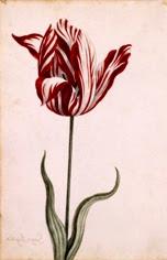 La crisis del tulipan
