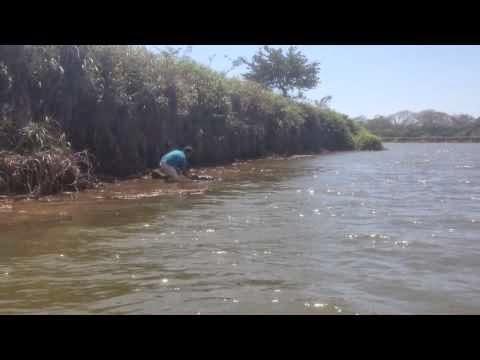 Apistefto-katafere-kai-edwse-ena-fili-se-enan-aligatora