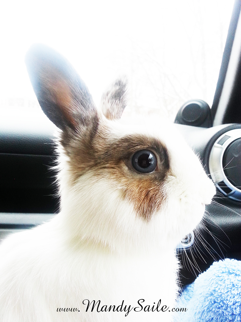 Follow the buns adventures on our brand new Instagram stream @leporidaelovely