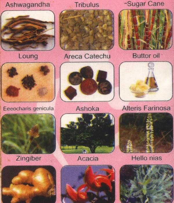 Likoria and Menses Best Herbal Medicine in Pakistan
