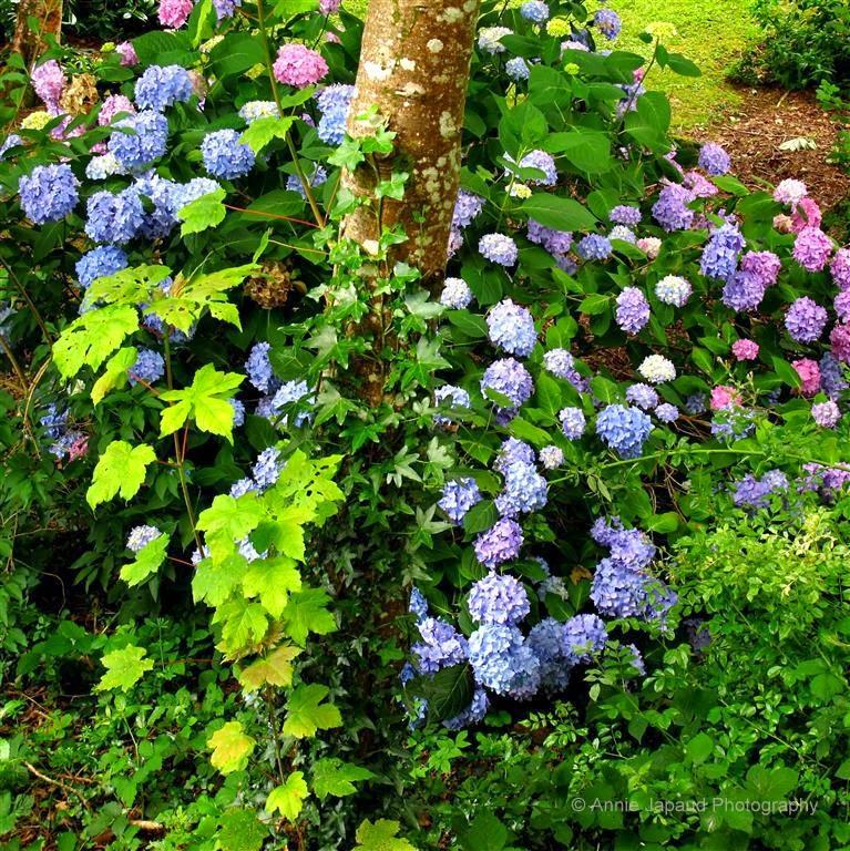 flowers, trees