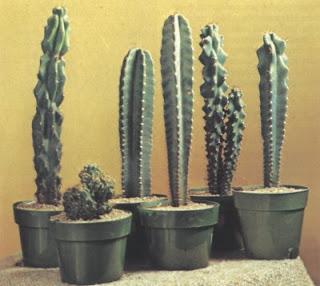 Cactus Plants Pictures