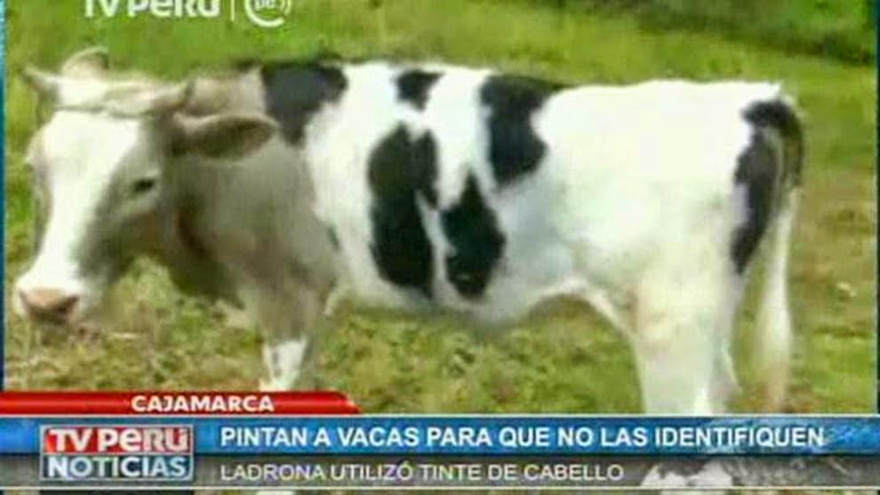 vaca pintada