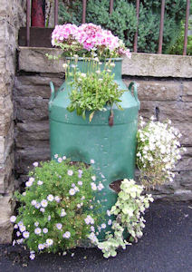 Cleaning Flower Pots