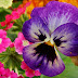 Top 10 Most Beautiful Flowers Of The World
