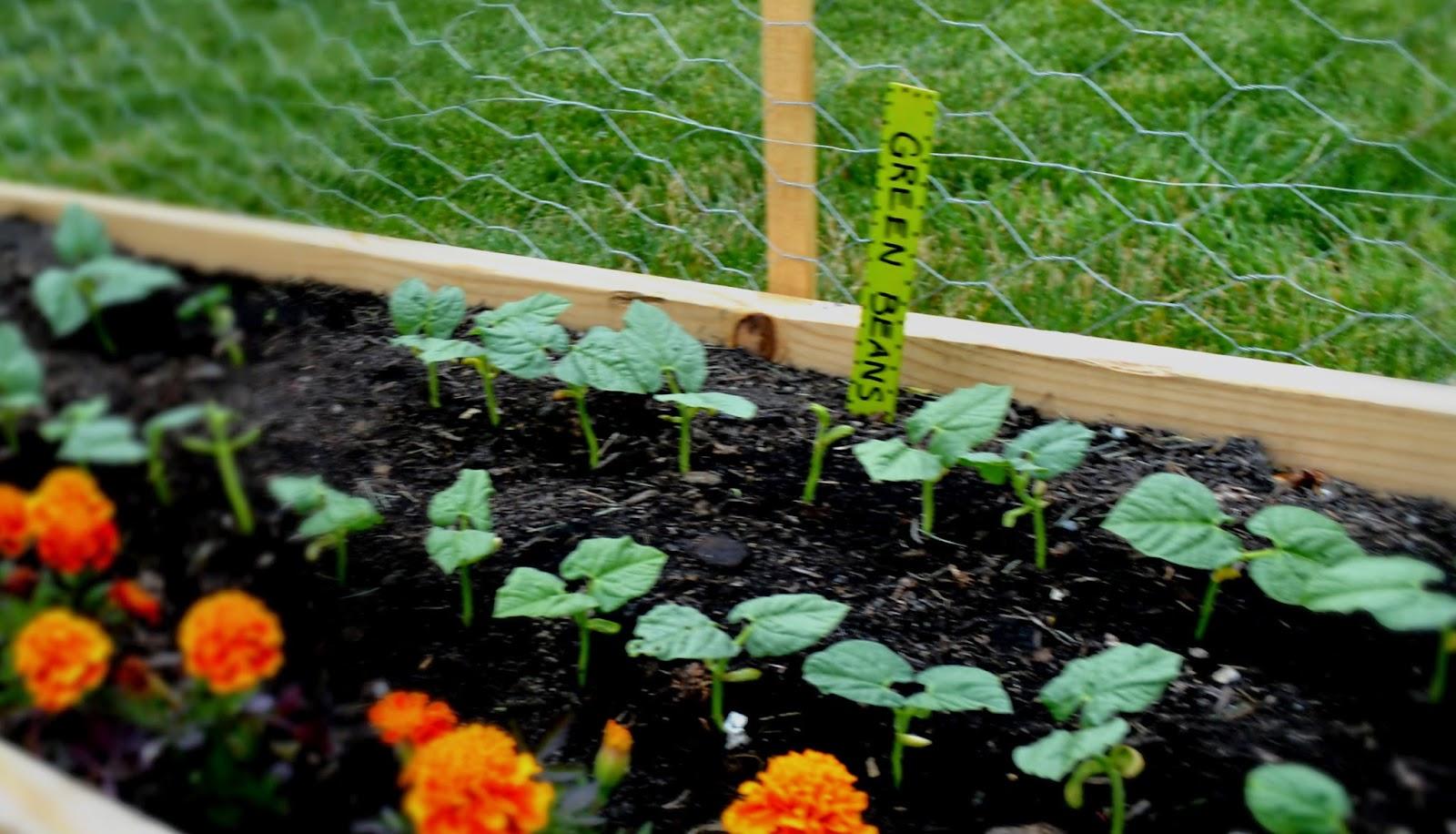 Loving Life Diy Garden Labels From Wooden Paint Sticks