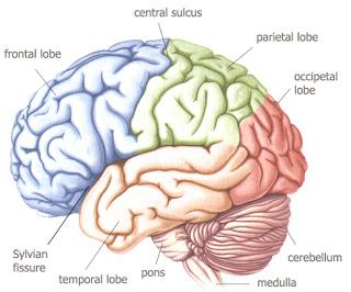Brain For Kids3