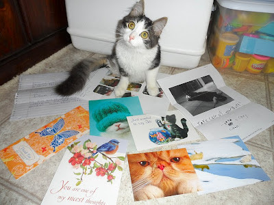 Anakin Two Legged Cat Cards &amp; Letters from friends &amp; fans