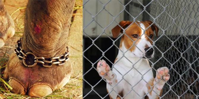 Inilah 8 Kasus Kekejaman Manusia Terhadap Hewan