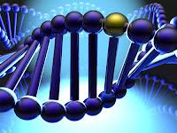 http://1.bp.blogspot.com/-itbh7BdyFV8/Tvqr2k6TbvI/AAAAAAAAAU0/eJHhXhuJ9z0/s1600/Gen+dan+DNA.jpg