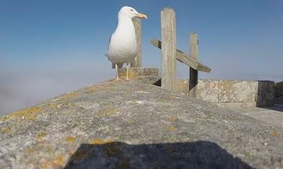 Γλάρος κλέβει GoPro κάμερα