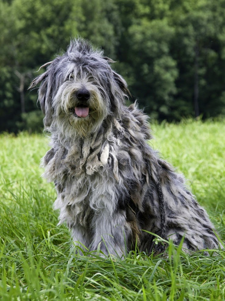 Top 5 Strangest Looking Dog Breeds
