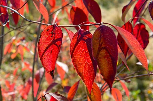 Kingston; Canada; Leaves