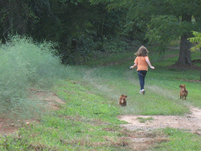 dachshunds running with girl