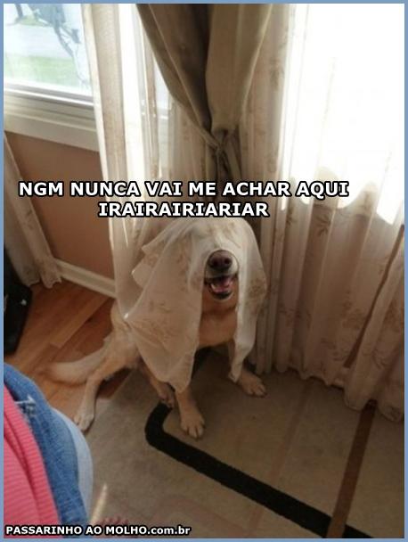 cachorro escondido na cortina