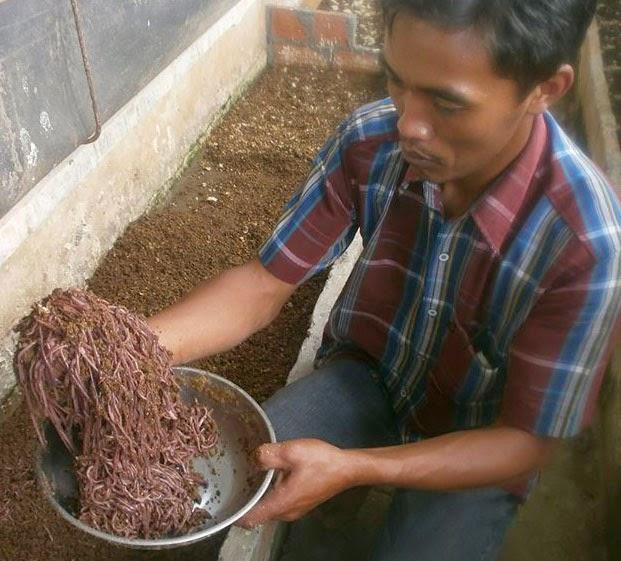 Peluang Bisnis Rumahan Ini Hasilkan Uang 300 Juta Bulan Peluang