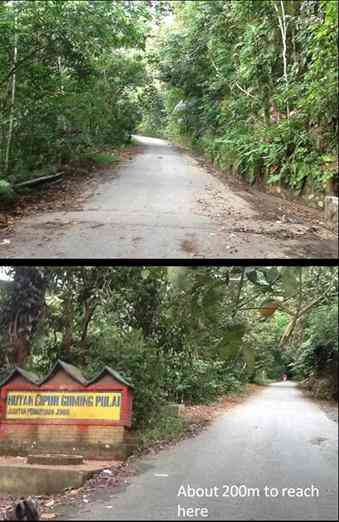 the road up to Mount Pulai