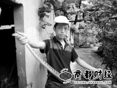 武漢 義蛇