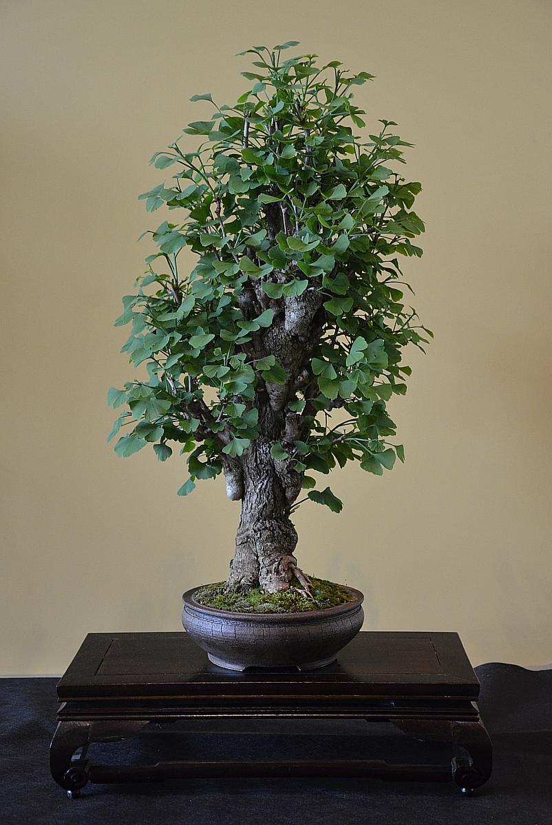 Bonsai Living Art EBA 2012