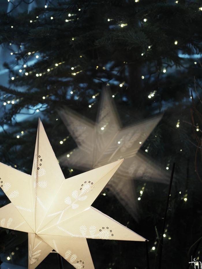 joulutähti ja joulukuusi - xmasstar and zmastree