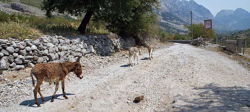 Albania góry Przeklęte