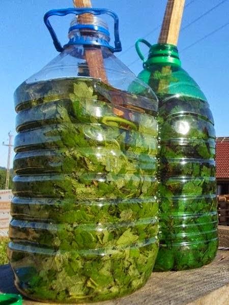 Aprende a hacer abono l quido casero jardin de casa for Abono para las plantas de jardin