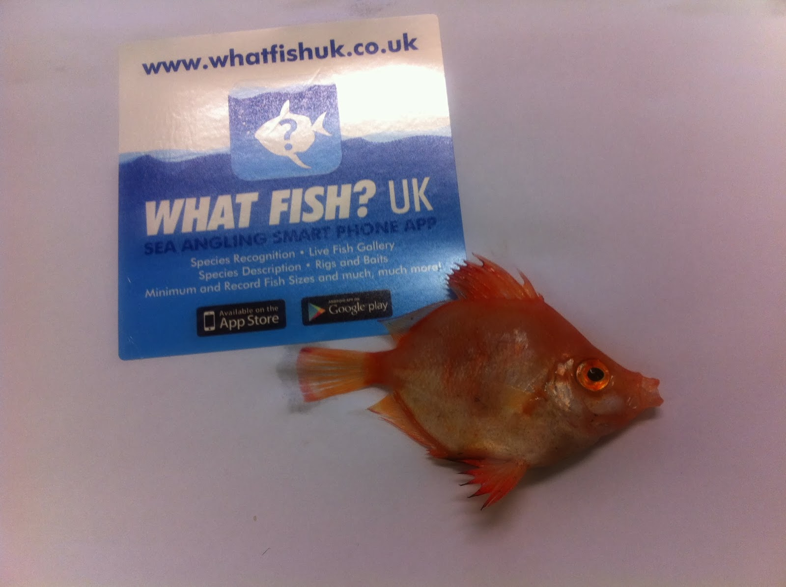 What fish uk another new species for what fish uk for Fish identification apps