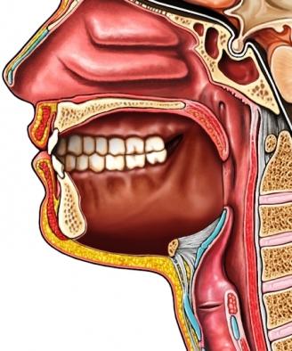 Desarrollo cavidad oral | Embriología Buco-Dental* Anggie\'s Blog