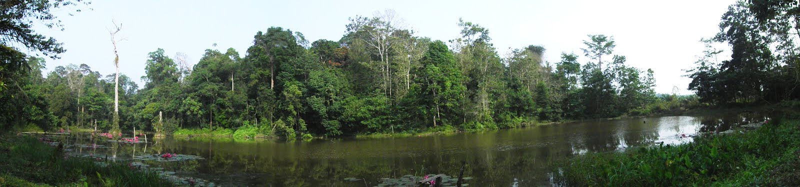Harapan Rainforest