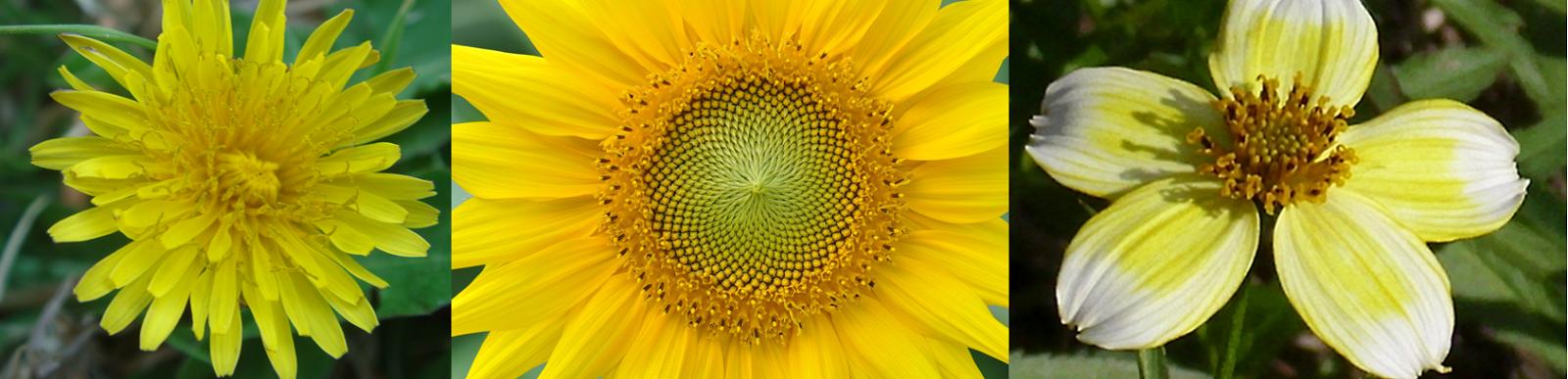 La flor, un diseño inteligente Composita