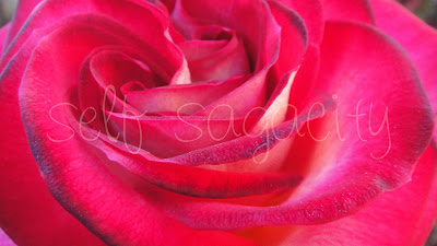 red rose with swirls