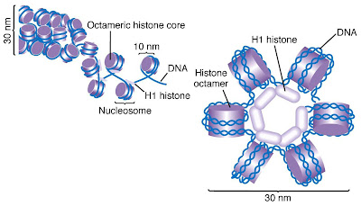 La epigenética y el resurgir del lamarckismo MGA2-02-41