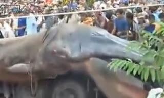 monstruo marino encontrado en Vietnam