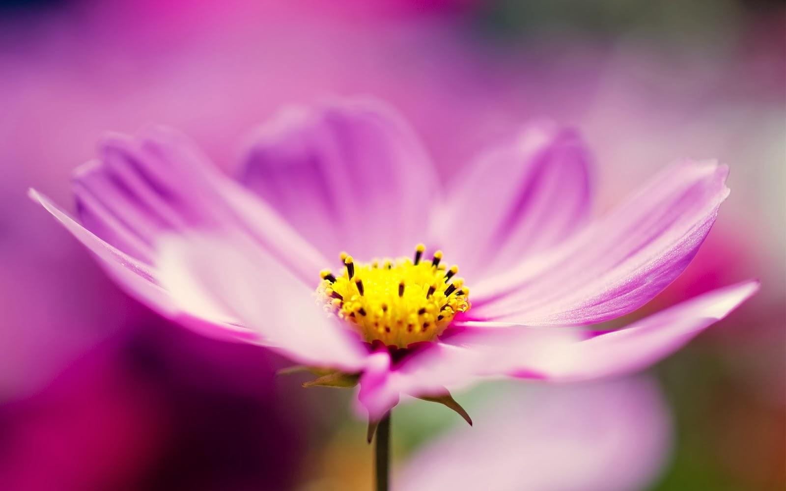 """<img src=""""http://1.bp.blogspot.com/-ixT7l1rzQK8/UuzJKVQGLNI/AAAAAAAAKyw/k0sqjtuDzyA/s1600/purple-flower-wallpaper.jpg"""" alt=""""purple flower wallpaper"""" />"""