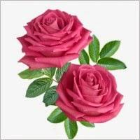 bunga ros dua