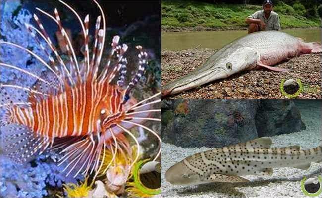 5 Ikan yang memiliki Nama Hewan Lain