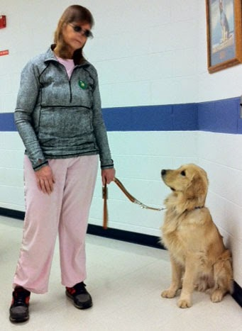 A woman wearing sunglasses, pink pants and a light blue top is standing and looking down at a golden retriever who is sitting to the right looking up at her. The woman is holding a leash in her left hand that is attached to the dog's collar. There is a bright blue line painted along the white brick wall behind them that helps the visually impaired navigate. There is also a framed picture on the wall above the dog.
