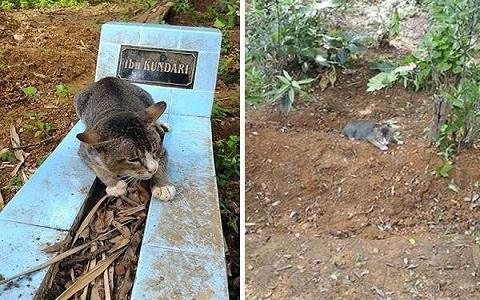 Gato simpático não abandona o túmulo de sua dona