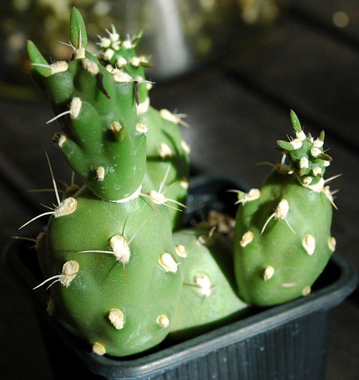 Floraciones en m laga y m s septiembre 2011 for Que se planta en septiembre