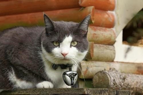 Eyenimal — персональная камера для котиков