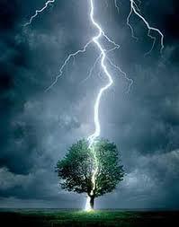 fotografia rayo árbol