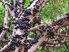 Flora Bacia Taquari-Antas   Fonte: Aepan-ONG