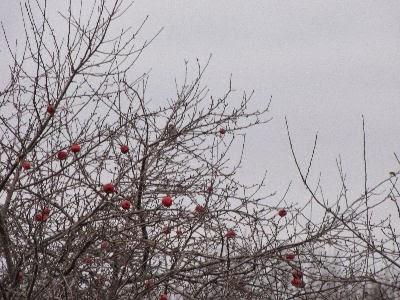 bird in apple tree