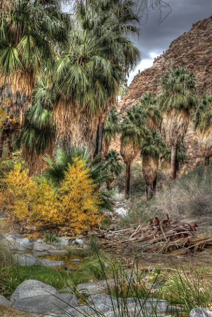 Palm Springs oasis hdr