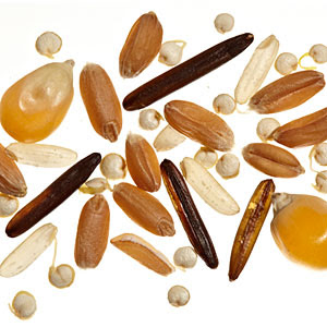 Grains and fiber can reduce the risk of colon cancer