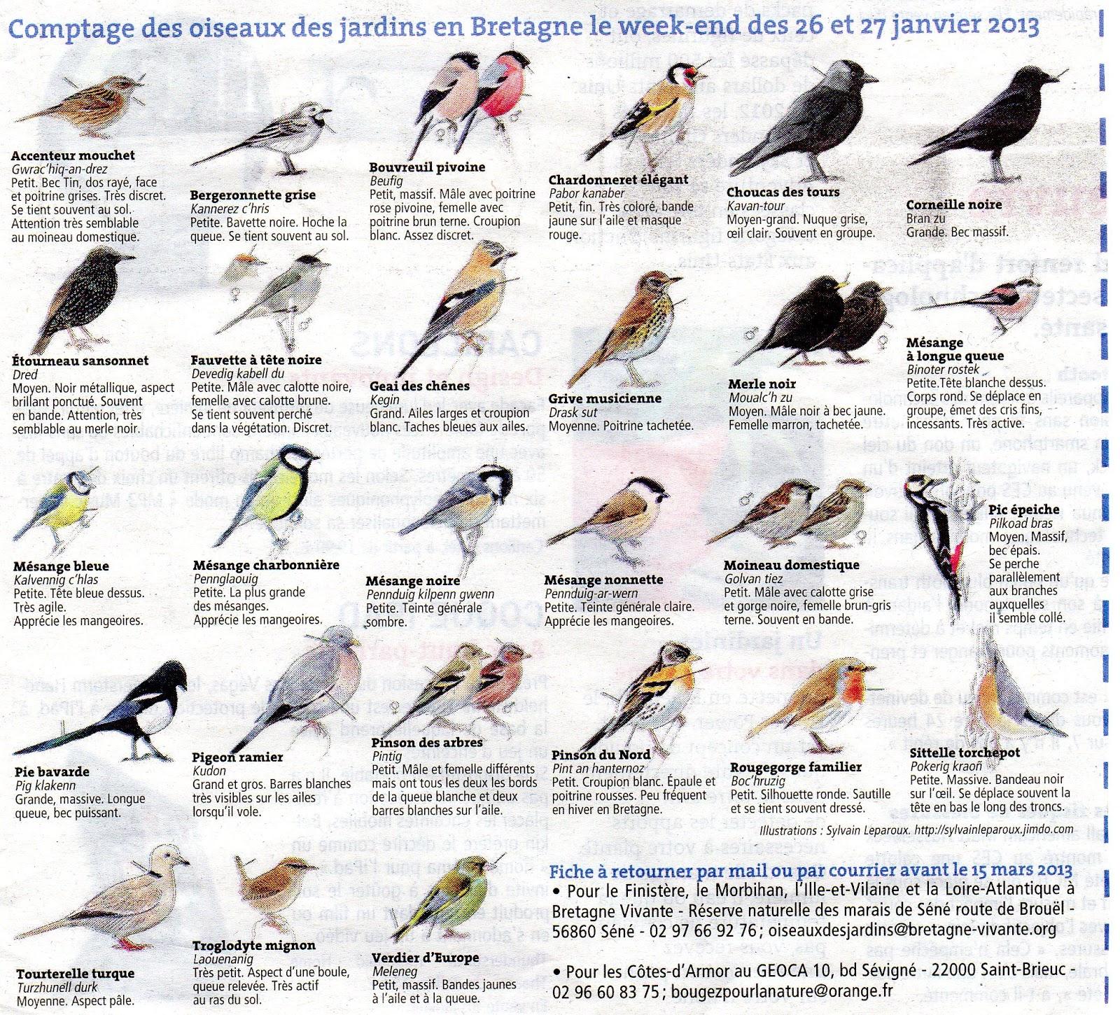 Les jardins familiaux de feunteun don les oiseaux de nos for Oiseaux de nos jardins belgique