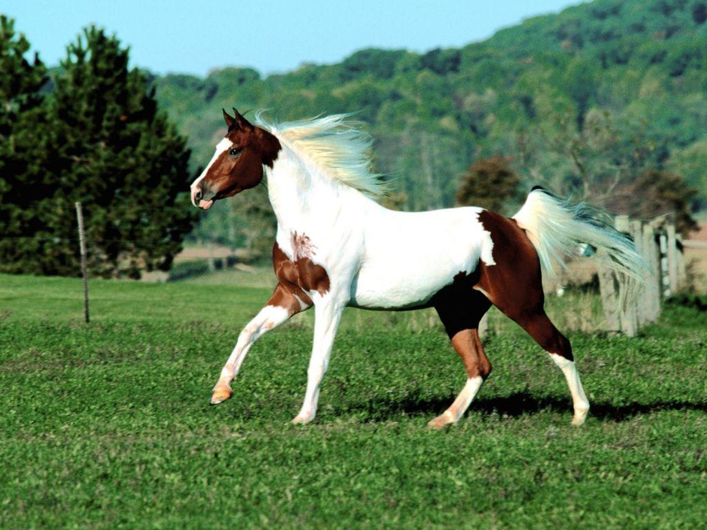 Animales: Los caballos