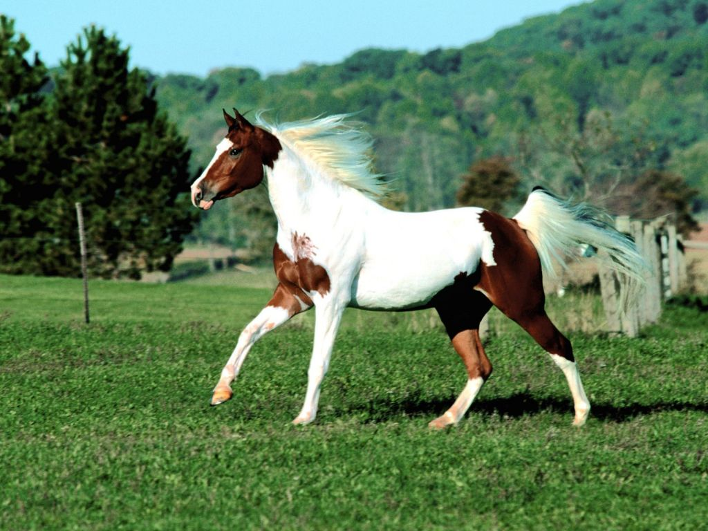 Caballo Mustang: