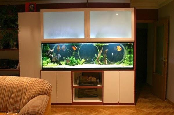 Como hacer un acuario en casa indicaciones paso a paso - Peceras en casa ...